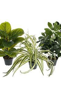 Bilde av Grønnplanter Mix