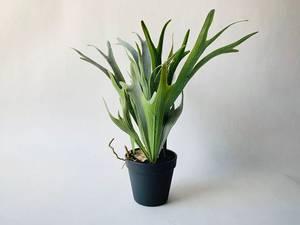 Bilde av Plante i potte H:48 cm