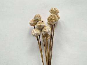 Bilde av Tørket blomst tusenfryd 40 cm
