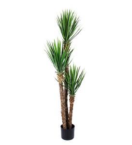Bilde av Yucca Plante Rostrata 150 cm